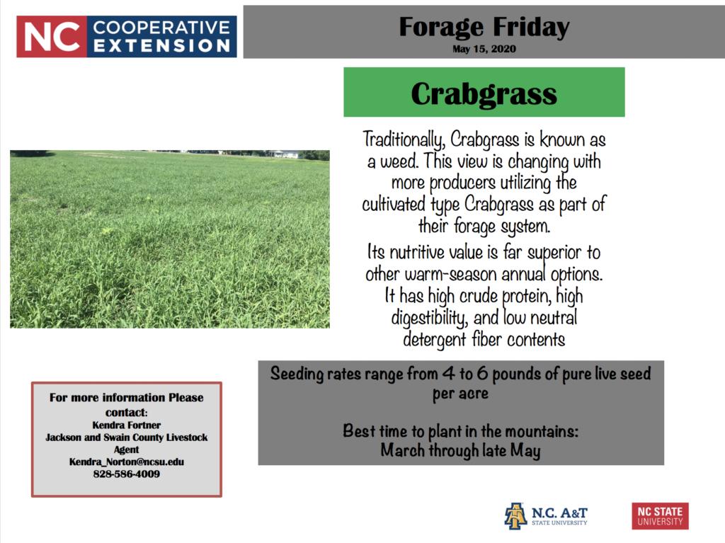 Forage Friday Crabgrass
