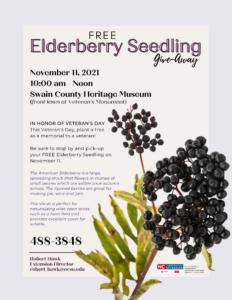2021 Fall Tree Give-Away Elderberry (1)