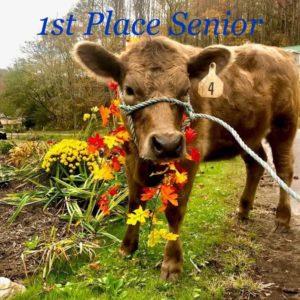 1st Place Senior: Sydney