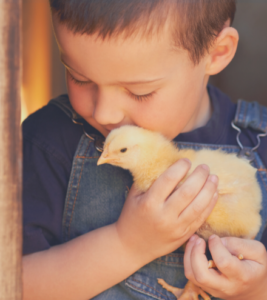 Boy with baby chick