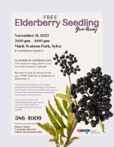 2021 Fall Tree Give-Away Elderberry JACKSON