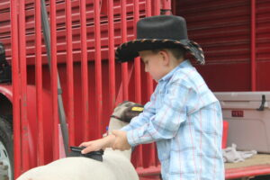 4-H with lamb